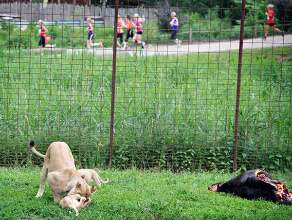 fibromer i livmoderen zoo i Sjælland